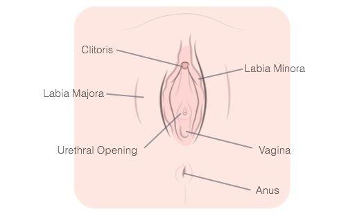 finger-her-anatomy-diagram