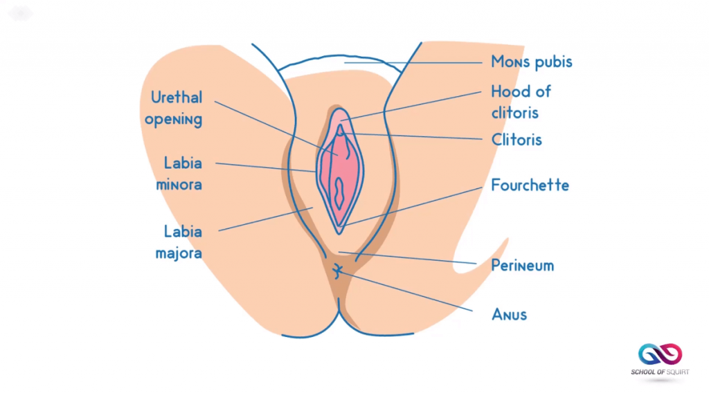 what hole does period blood come out