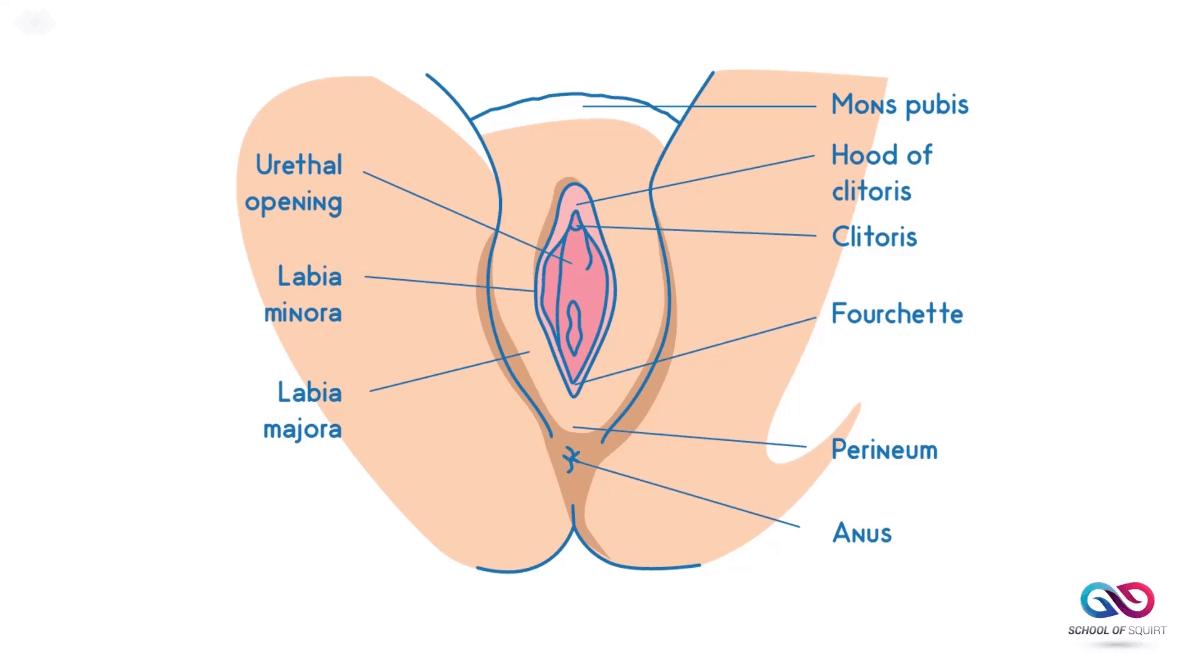 Prolapse anal orgasm squirt